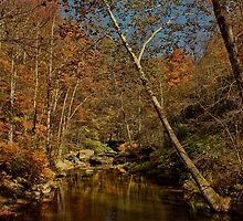 Auburn Autumn by Lanis Rossi