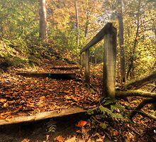 As Fall Ends... || Winter Beckons... by Anir Pandit