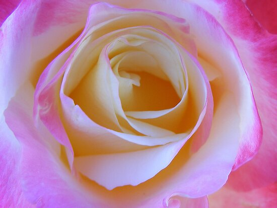 LOVELY ROSE by gracestout2007
