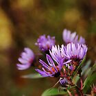Autumn Wild Asters by Debbie Oppermann