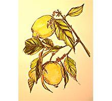 Lemons. Pen and wash 42x32cm Photographic Print