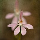 Australian Native Orchids by louise