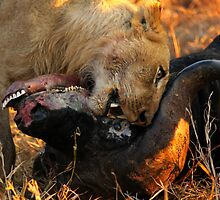 Lion Kill 2 by PBreedveld