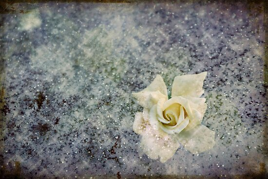 The Rose  by ©Maria Medeiros