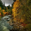 To View His Beauty by Charles & Patricia   Harkins ~ Picture Oregon