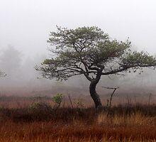 5.11.2012: Old Pine Tree by Petri Volanen