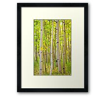 Aspen Tree Forest Autumn Time Portrait Framed Print