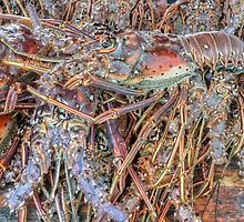 Fish Market: Crawfish at Montagu Beach in Nassau, The Bahamas by 242Digital