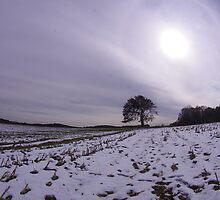 Sun Over A Lone Tree by jpsphotoart
