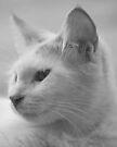 Spy Cat Portrait by tropicalsamuelv
