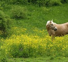 Buttercup in the Buttercups by wolftinz