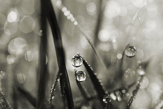 Rain Sparkles by Sharon Johnstone