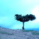 Atlas mountains 1 by venitakidwai1