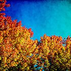 The magic of Fall by Milena Ilieva