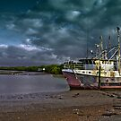 Weathering the Storm at Boondall Wetlands Brisbane by PhotoJoJo