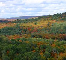 The View Atop The Lookout Trail Sept 26 2012- Algonquin Provincial Park by Tracy Faught