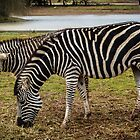 Stripey baby by Louise Delahunty