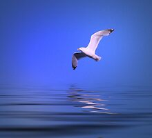 Seagull in Flight - #2 by kenspics