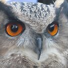 OWL STARE by Lynn Wright