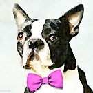 Boston Terrier - The Nervous Groom by Sharon Cummings