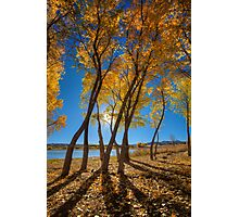 Skinny Fall Photographic Print