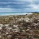 Maunganui beach by jlv-