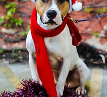 Christmas Staffy by JacquiLeigh