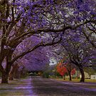 Jacarandas in Grafton by Warren  Patten