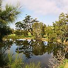 0087  Lake Reflections at Tuross by Peter Hogarth