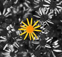 Wonderful little weed by photosbymo