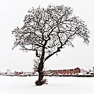 Gnarled tree in a snowy field - iPad Case by Tom Gomez