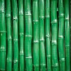 Green Bamboo by Alanqpr