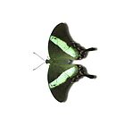 Smartphone Case - Butterfly - Emerald Swallowtail by Mark Podger