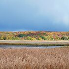Fall in NW Michigan by enchantedImages