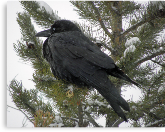Decorative Raven by DWMMPhotography