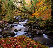 Autumn Waterfall & Stream  by Michael  Browne