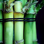 Bamboo by Somerset33