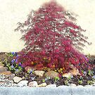 Japanese Maple by trisha22