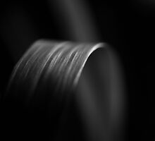 black and white leaf by Francisco Gorrez