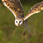 African Art Barn Owl by Leigh Diprose
