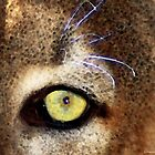 Cougar Eye by Sharon Cummings