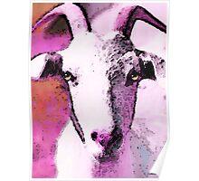 Goat Art - Pinky Poster