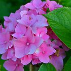 pink flowers by David Galson