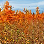 Tamarack Field by EBArt