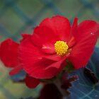 Planter Box Flower by David Galson