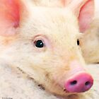 Pig Art - Pretty In Pink by Sharon Cummings