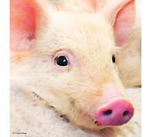 Pig Art - Pretty In Pink Photographic Print