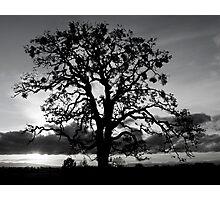 Lone Oak Silhouette Photographic Print