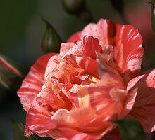 Romantic..... by Joy Watson