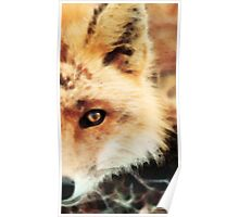 Soft Sly Fox Poster